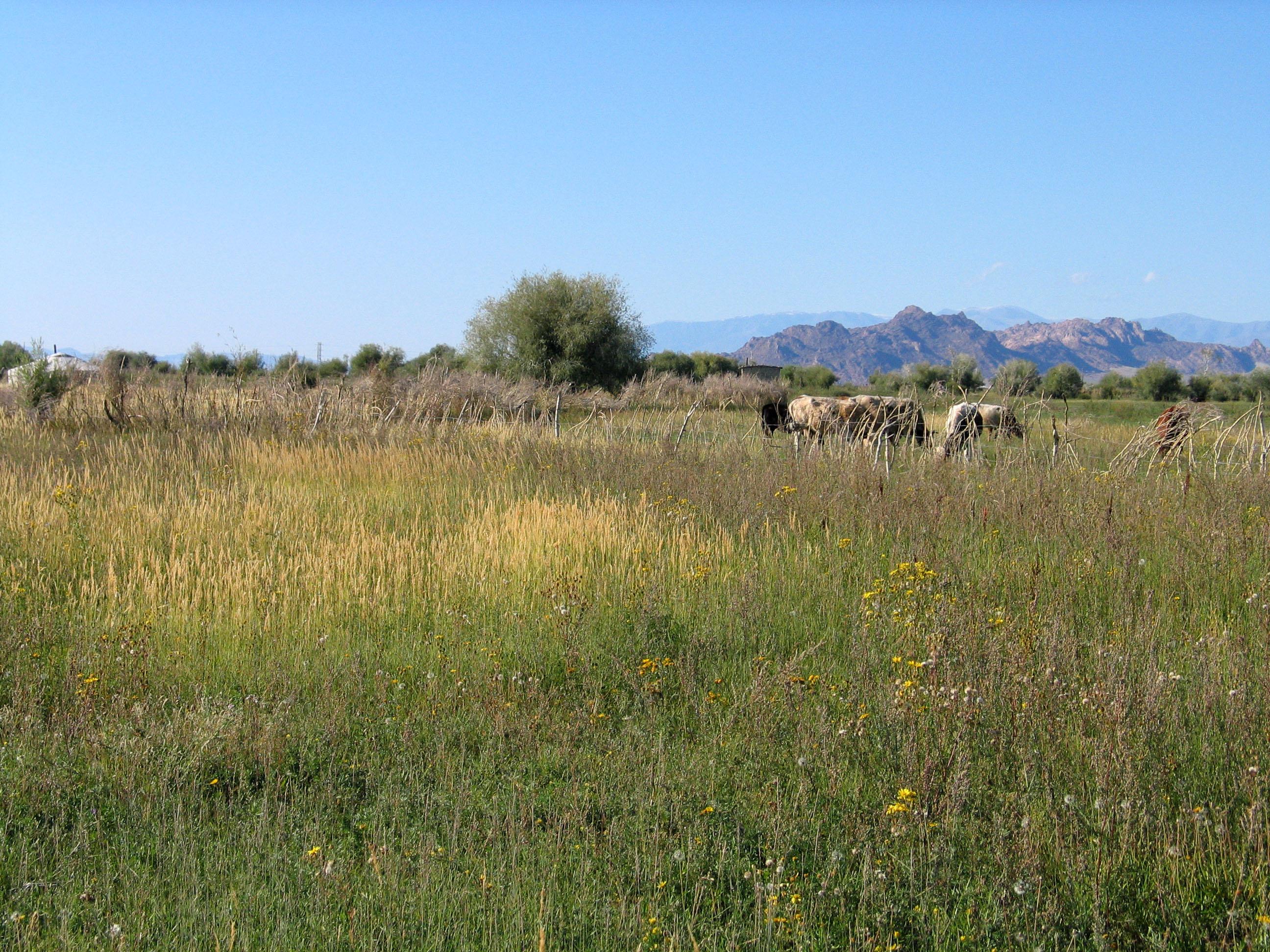 view image: Artemisia vulgaris L.