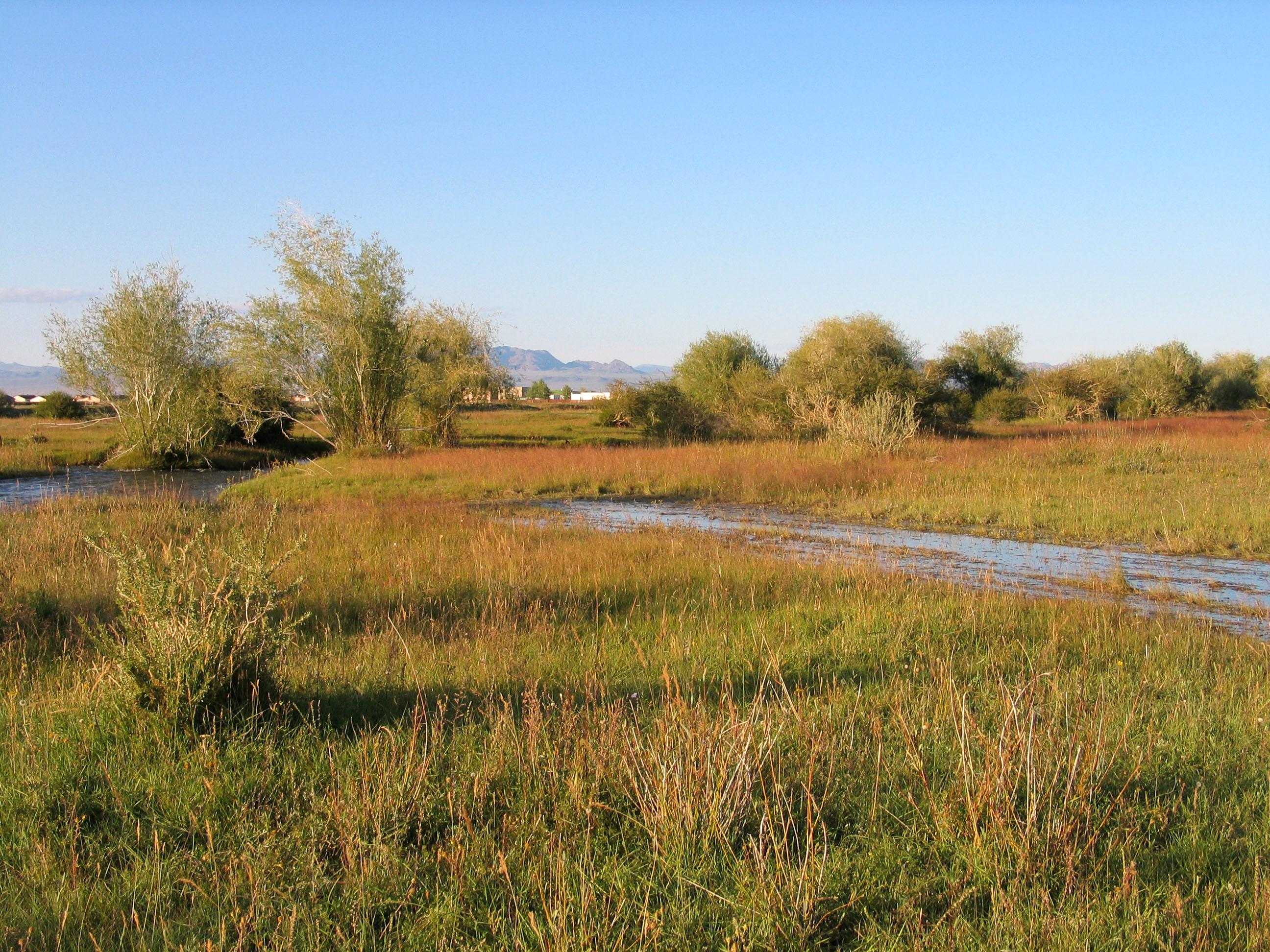 view image: Salix viminalis L.