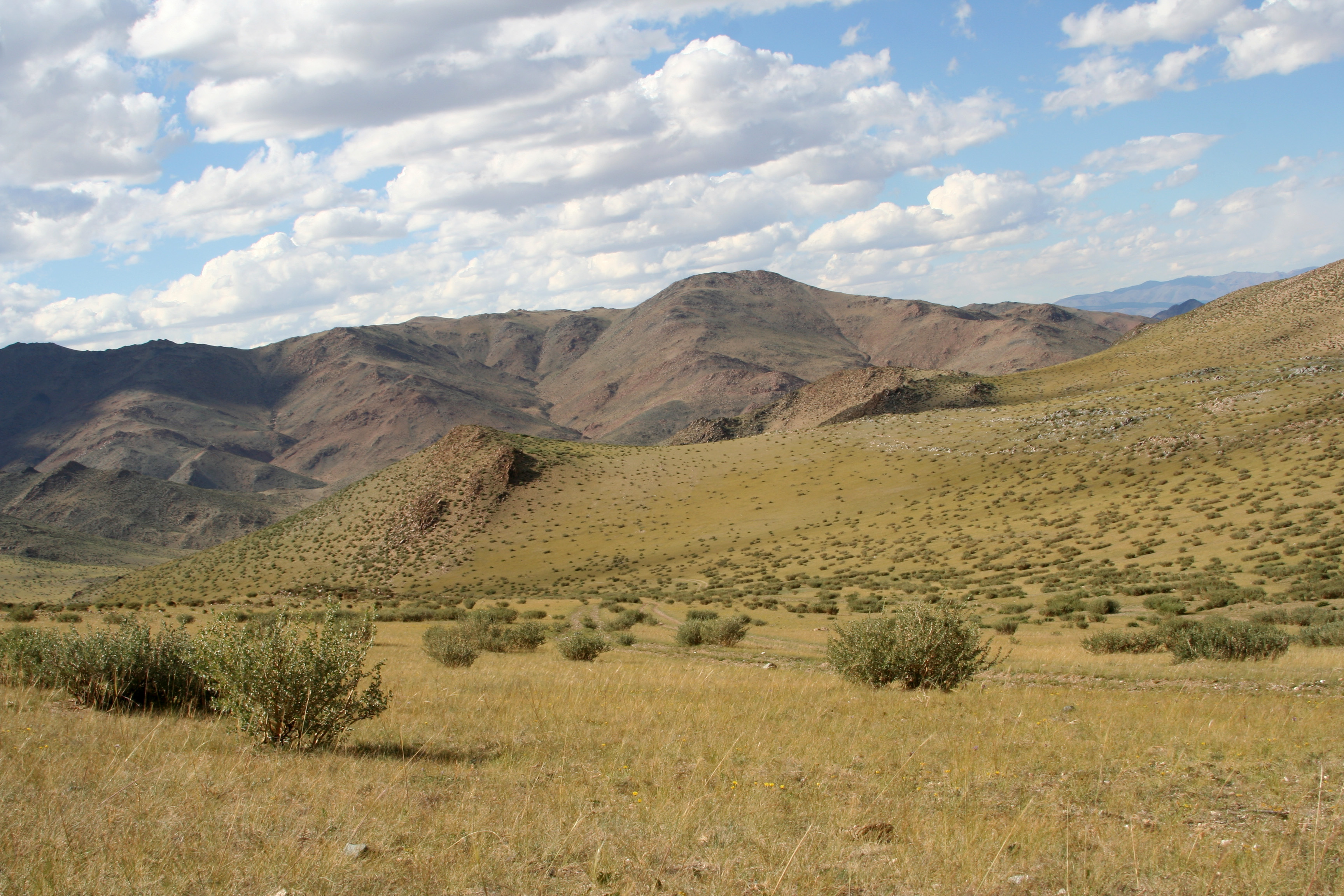 view image: Artemisia rutifolia Steph. ex Spreng.