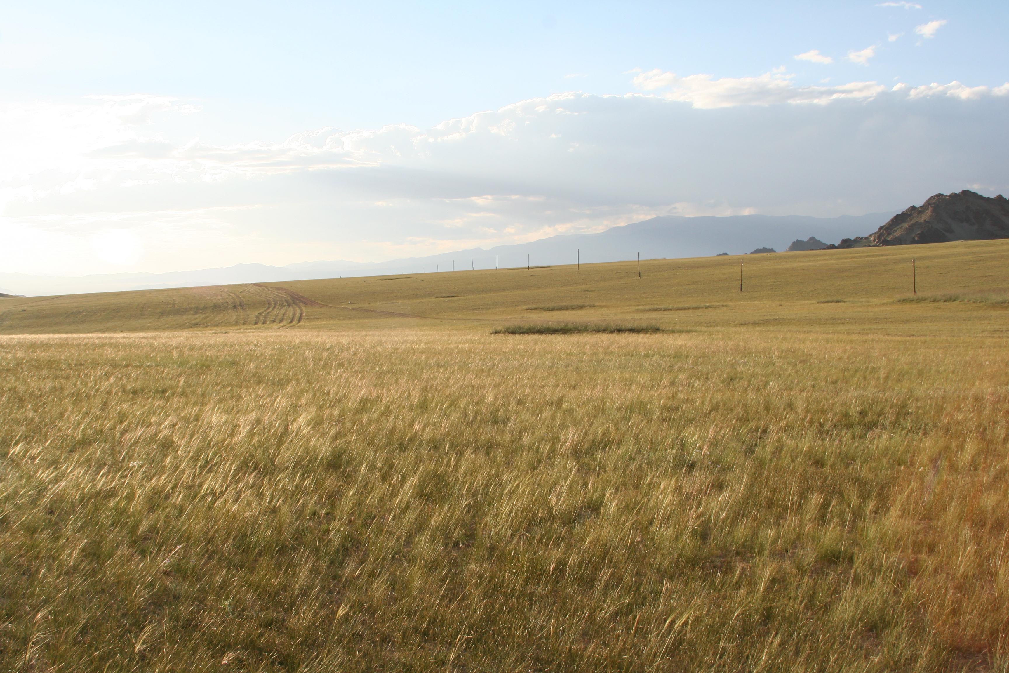 view image: Scorzonera austriaca Willd.