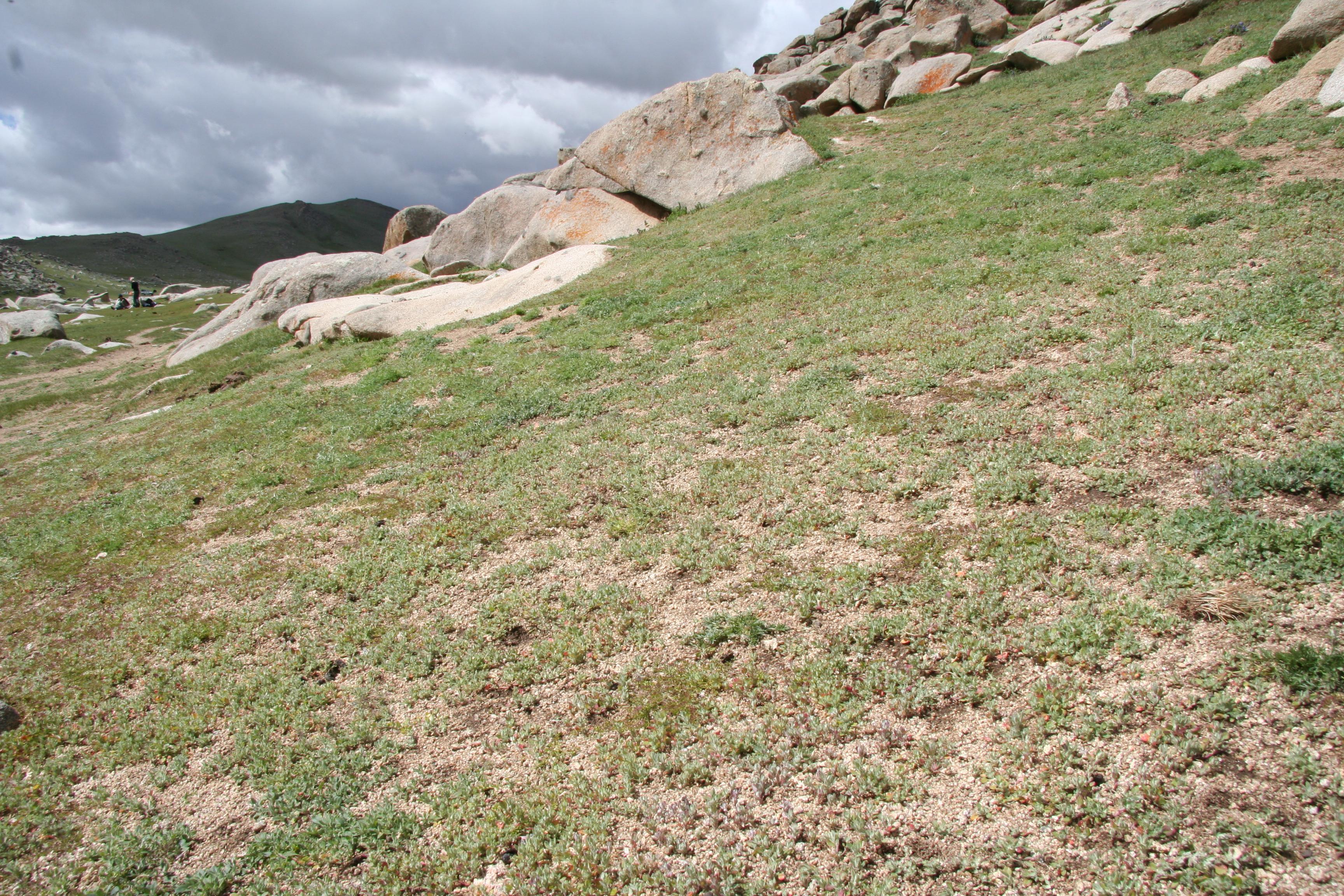view image: Artemisia adamsii Bess.