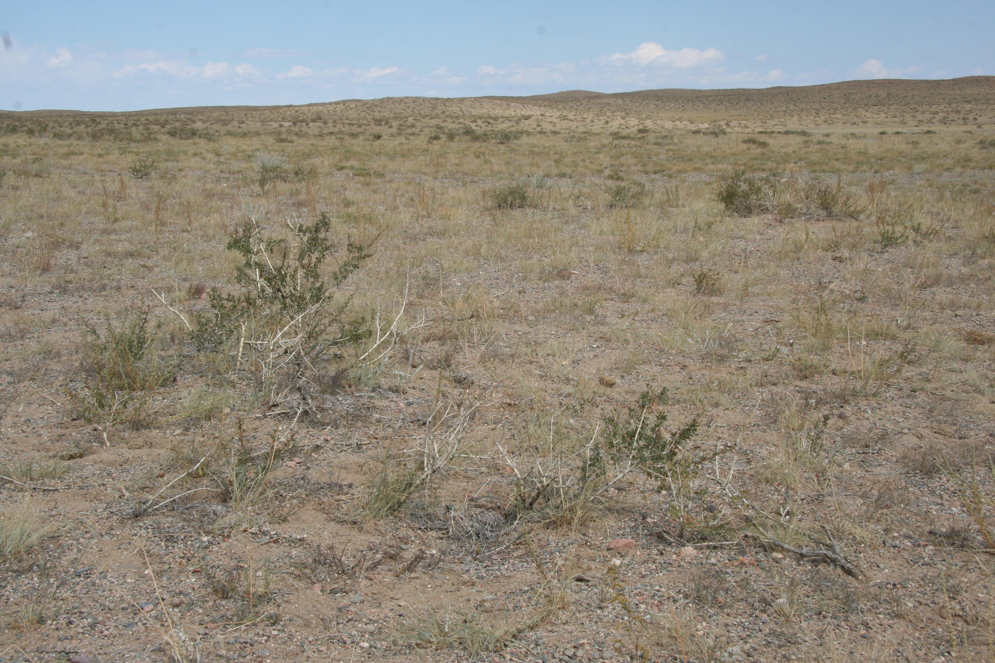 view image: Artemisia anethifolia Web. ex Stechm.