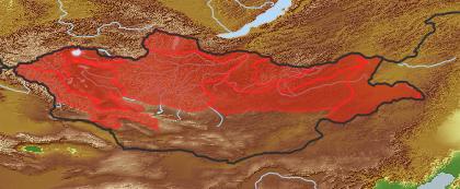 taxon distribution for Alyssum  acc. to Geobotanical Regions of Mongolia by Grubov (1955)
