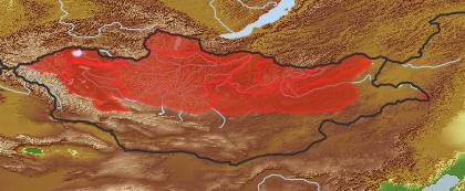 taxon distribution for Kitagawia baicalensis acc. to Geobotanical Regions of Mongolia by Grubov (1955)