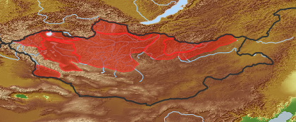 taxon distribution for Salix rosmarinifolia acc. to Geobotanical Regions of Mongolia by Grubov (1955)