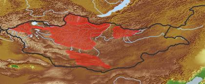 taxon distribution for Campanula turczaninovii acc. to Geobotanical Regions of Mongolia by Grubov (1955)