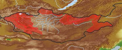 taxon distribution for Senecio arcticus acc. to Geobotanical Regions of Mongolia by Grubov (1955)