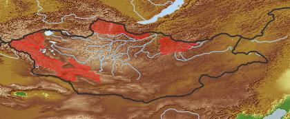 taxon distribution for Salix turczaninowii acc. to Geobotanical Regions of Mongolia by Grubov (1955)
