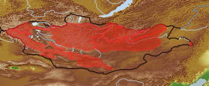 taxon distribution for Tragopogon  acc. to Geobotanical Regions of Mongolia by Grubov (1955)