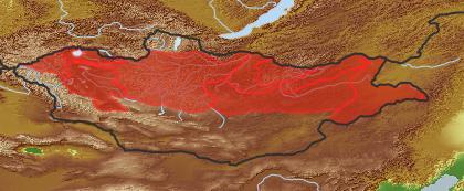 taxon distribution for Salix microstachya acc. to Geobotanical Regions of Mongolia by Grubov (1955)