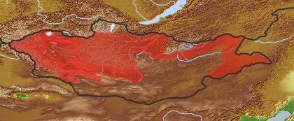 taxon distribution for Bidens cernua acc. to Geobotanical Regions of Mongolia by Grubov (1955)