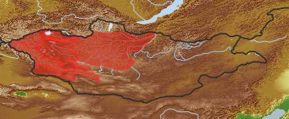 taxon distribution for Asperugo  acc. to Geobotanical Regions of Mongolia by Grubov (1955)