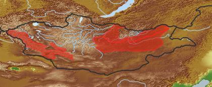 taxon distribution for Taraxacum asiaticum acc. to Geobotanical Regions of Mongolia by Grubov (1955)