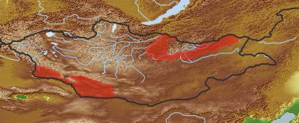 taxon distribution for Cirsium incanum acc. to Geobotanical Regions of Mongolia by Grubov (1955)