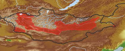 taxon distribution for Alisma gramineum acc. to Geobotanical Regions of Mongolia by Grubov (1955)