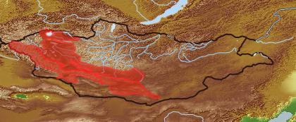 taxon distribution for Arabis rupicola acc. to Geobotanical Regions of Mongolia by Grubov (1955)