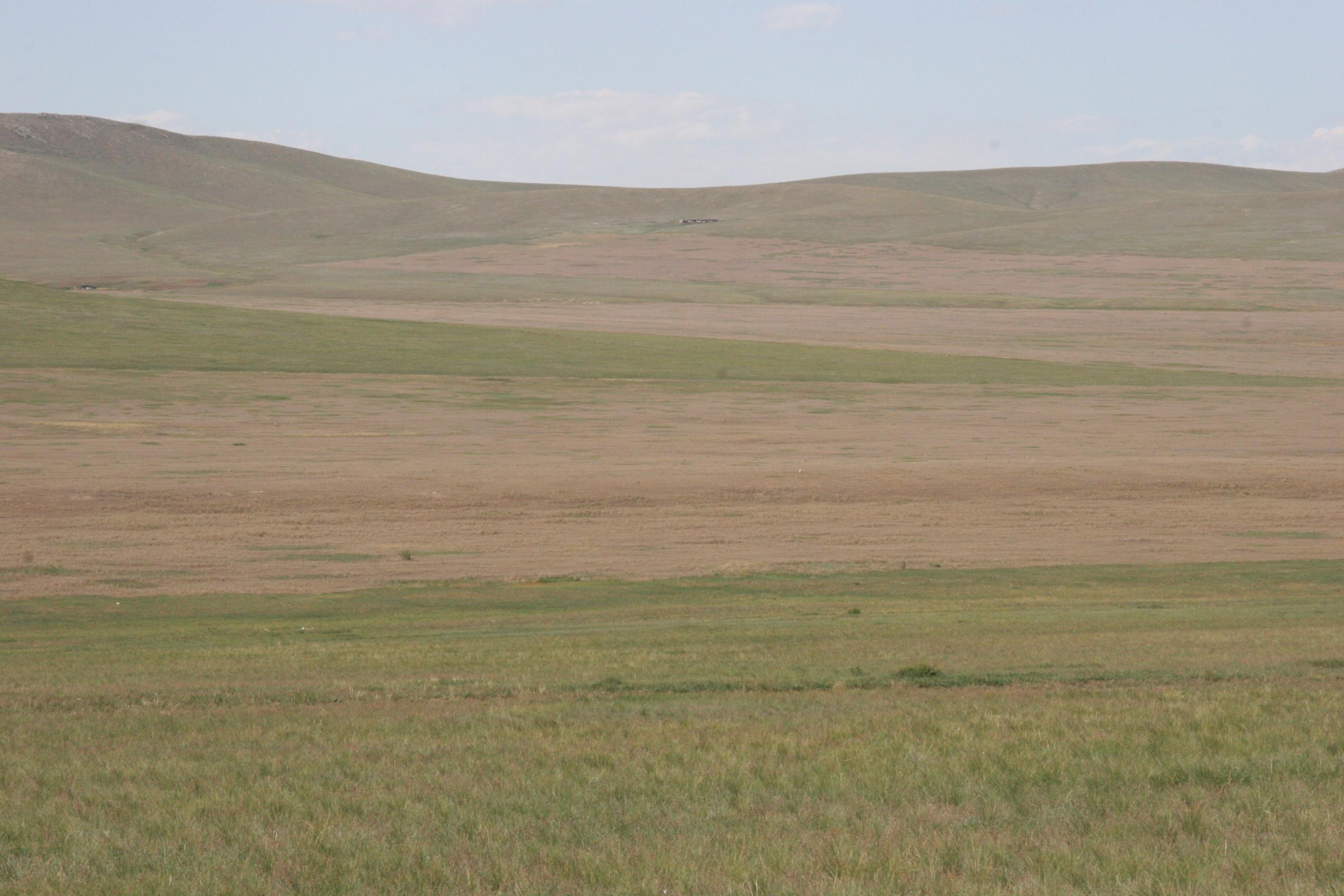 view image: Artemisia frigida Willd.